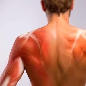 Болят мышцы после тренировки: что делать, чтобы уменьшить боль