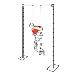 Отжимания на весу на TRX