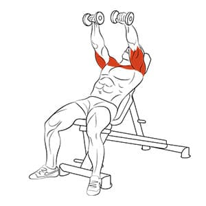 Подъем гантелей перед собой на наклонной скамье