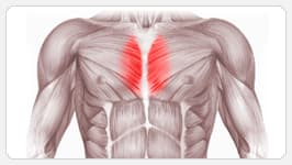 внутренняя часть грудных мышц