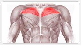 верхняя часть грудных мышц